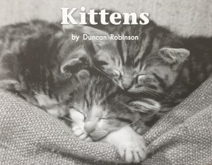 """""""Kittens"""" by Duncan Robinson"""